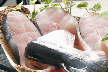 Giảm khâu trung gian để cứu cá tra