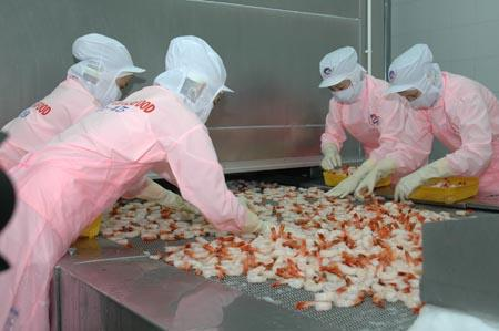 Giấc mơ 3,5 tỷ USD của Thủy sản Minh Phú