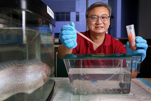 Phát triển nanovaccine đường uống cho cá