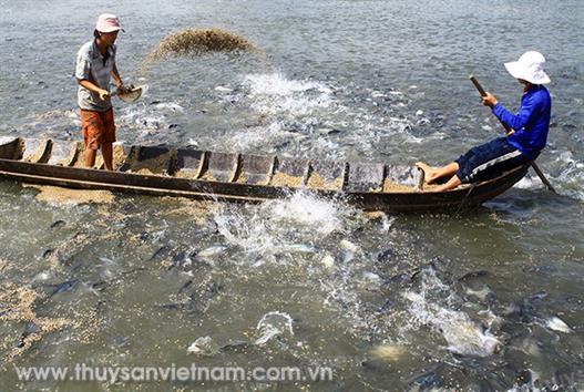 Xuất khẩu cá tra vẫn triển vọng