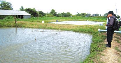 SOHAFOOD Cùng nông dân nuôi cá rô phi xuất khẩu