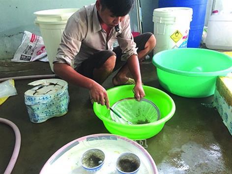 Cà Mau: Phòng dịch bệnh trên tôm nuôi