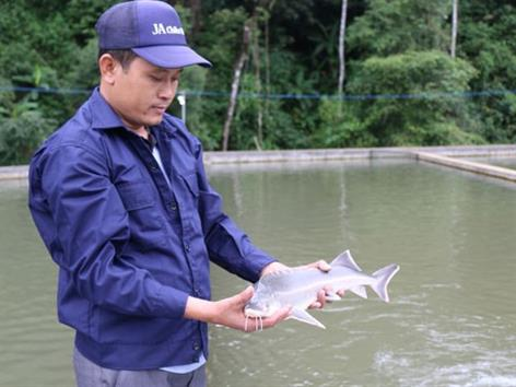 Lâm Đồng: Vỡ mộng cá nước lạnh