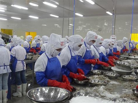 Tạo nguồn tôm sạch, tận dụng cơ hội ở EU, Mỹ