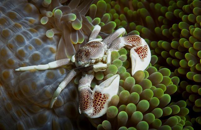 Mười loài cua đẹp và lạ nhất thế giới