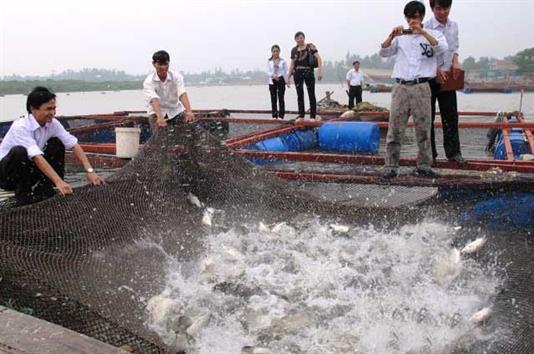 HTX Hải Tiến: Khai thác lợi thế từ nuôi thủy hải sản