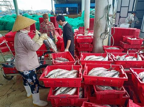 Phú Yên: Mỗi tàu lãi hàng trăm triệu đồng