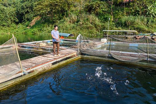 Tuyên Quang: Người dân Nà Lạ nuôi cá lồng hiệu quả