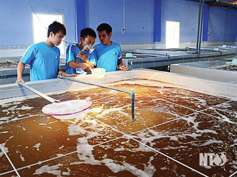 Ninh Thuận: Nhìn lại chặng đường 27 năm phát triển nuôi trồng thủy sản