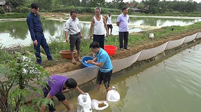 Hỗ trợ 70% chi phí để triển khai mô hình nuôi cá trê đồng trong ao đất