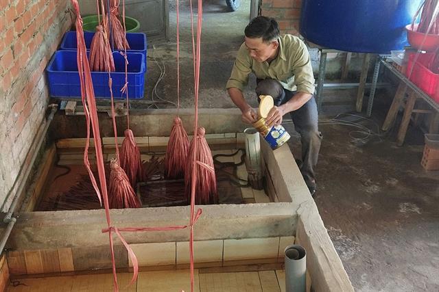Thoát nghèo từ mô hình nuôi lươn không bùn