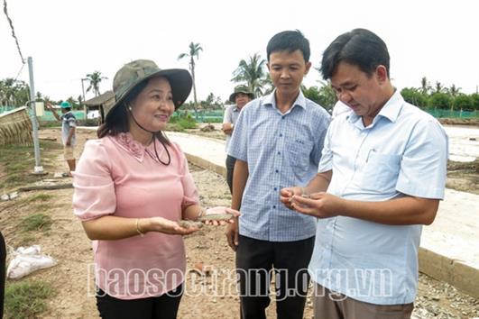 Sóc Trăng phát triển mạnh ngành nuôi tôm nước lợ