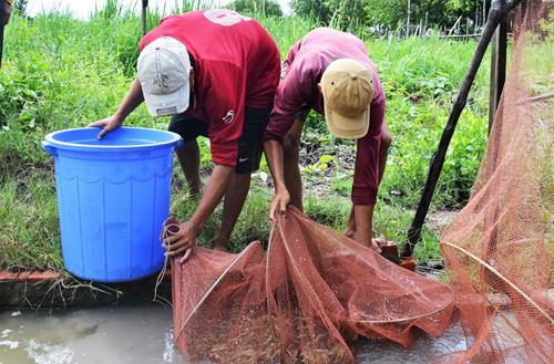 Nuôi tôm sạch dưới tán rừng lãi 200 triệu đồng mỗi năm