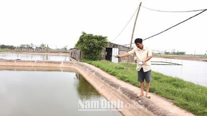 Nam Định: Phát triển nuôi tôm bền vững bằng công nghệ vi sinh
