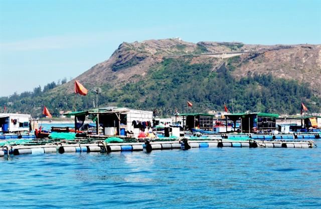 Quảng Ngãi: Nuôi cá bớp trên đảo Lý Sơn