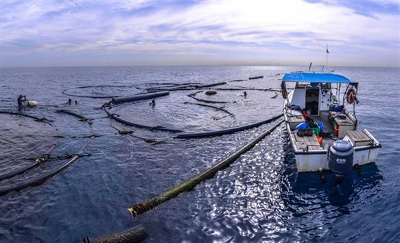 Quy định về việc giao khu vực biển để nuôi trồng thủy sản