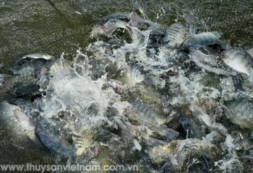 Sản lượng thủy sản đạt gần 5.800 tấn, tăng 5,4%