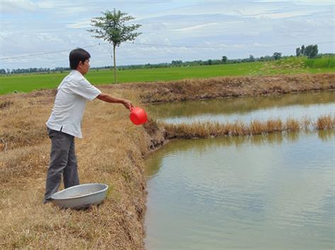 Sản xuất cá tra giống và làm mấy công lúa, thu 2 tỷ đồng/năm