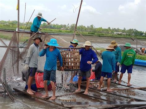 Tận dụng cơ hội cá tra