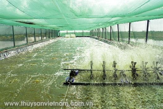 Thận trọng nuôi tôm mùa nóng