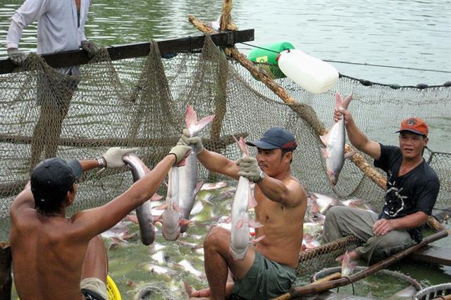 Xuất khẩu cá tra giảm hơn 30% nửa đầu năm 2020