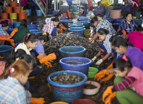 Những nỗ lực thương mại tôm phi thường của Thái Lan