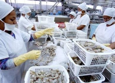 Ecuador: Xuất khẩu tôm sang Trung Quốc tăng mạnh