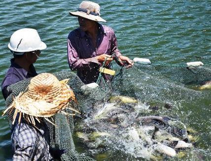 Video nuôi cá chẽm